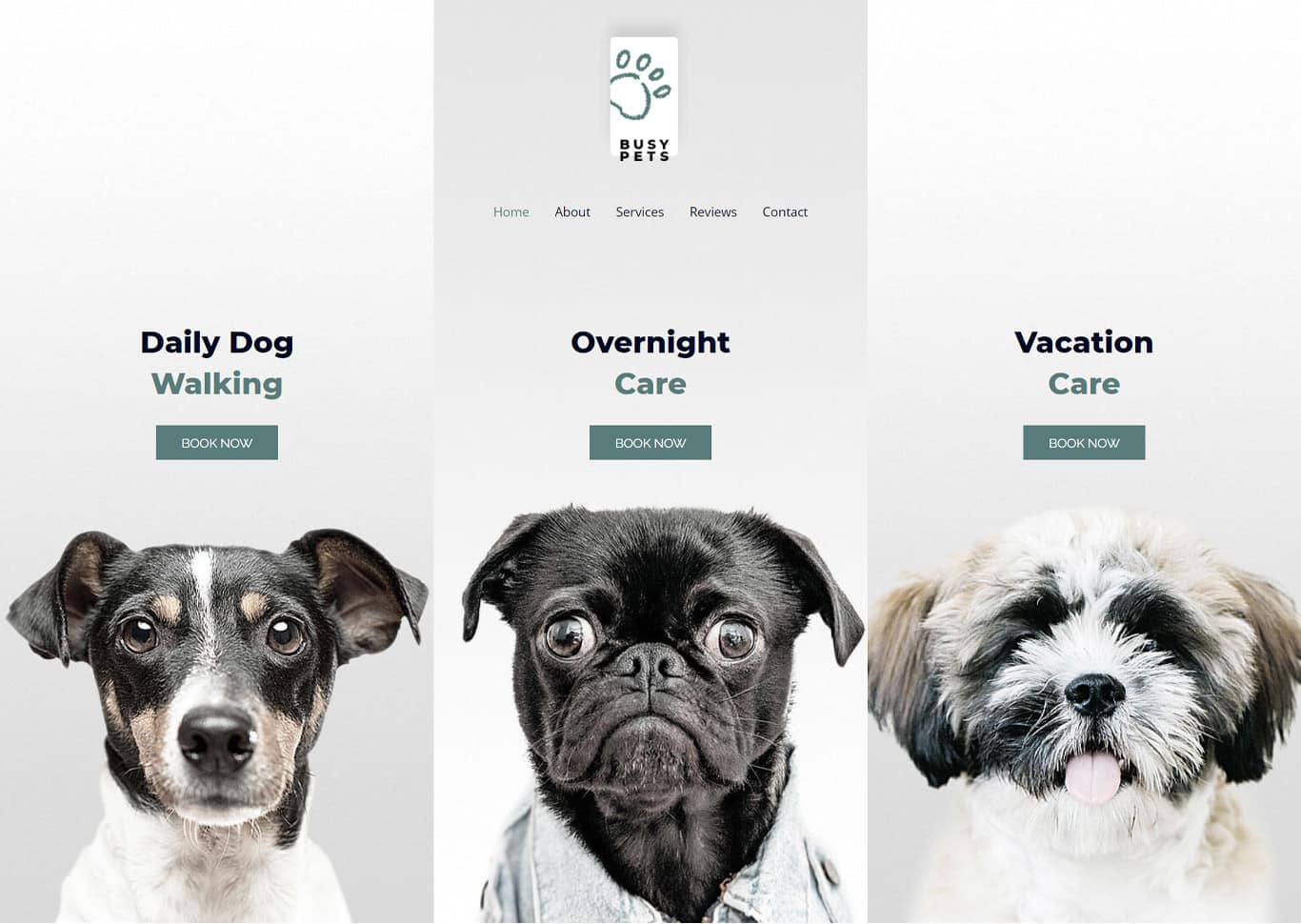 Pet care elementor site