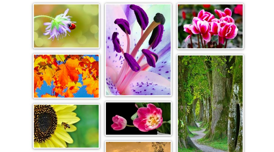 How to Create Inspirational Image Galleries in WordPress?